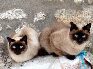 13 Gatos copia